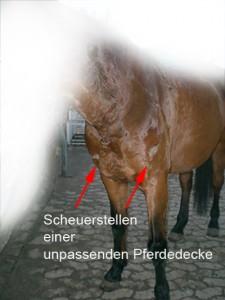 Scheuerstellen von Pferdedecke