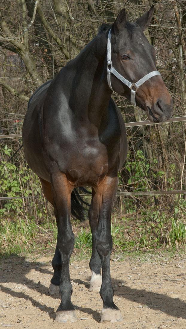 Pferdedecken Passformberatung Foto Frontansicht
