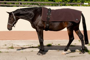 Rückenwärmer Pferd