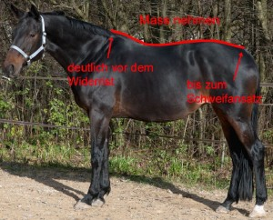 Pferdedecke wie messen