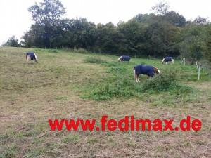 Pferdedecken für Welsh Cob
