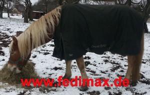 Read more about the article Regendecke mit Abschwitzfunktion für Pferd in Offenstall