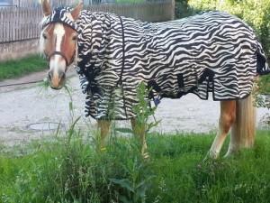 Fliegendecke Zebra für Hannoveraner