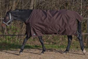 Read more about the article Welche Pferdedecken Größe für mein Pferd? Brauche Hilfe und Beratung