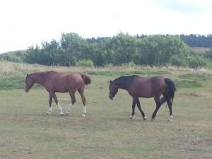 Regenoutdoordecke Pferde – Modellauswahl