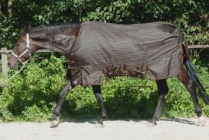 Regendecke mit Abschwitzfunktion für Quarter Horse